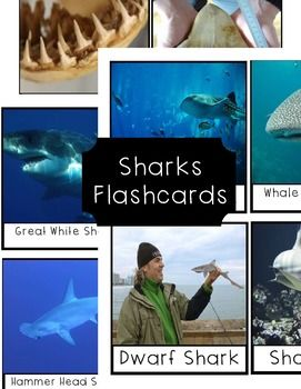 A set of 12 flashcards to help visualize any unit on sharks you want to teach your class about. These graphics are bright and colored, Each card is 4 1/2 by 3 3/4 and are labeled with different types of sharks or body parts of sharks, easy to detach and have your class use them as memorization of words.We used this flashcards in our unit on sharks.