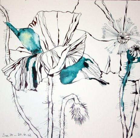 Blue poppy  www.susannehaun.com