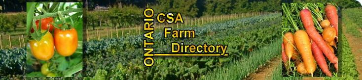 What is CSA? | csaadmin1 October 7, 2014 What is CSA?2016-10-19T00:19:47+00:00 | The consumer (you) wanting good quality,safe food pay the farmer a one-time fee (or share) prior to the start of growing season.This fee is determined by seed cost,equipment maintenance,property fees,tools,salaries,distribution costs,etc.In return,you receive weekly food boxes either by delivery or at a pick-up location near you.A full share may feed a family of 4 in produce for a week,where a half share may…
