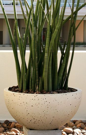Obbligato Plant Pots - bubble pot