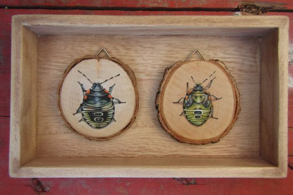 http://www.etsy.com/listing/122421500/green-stink-bugs-nymphs-acryl-on-wood