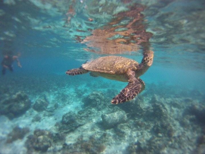Gili Islands, again:)
