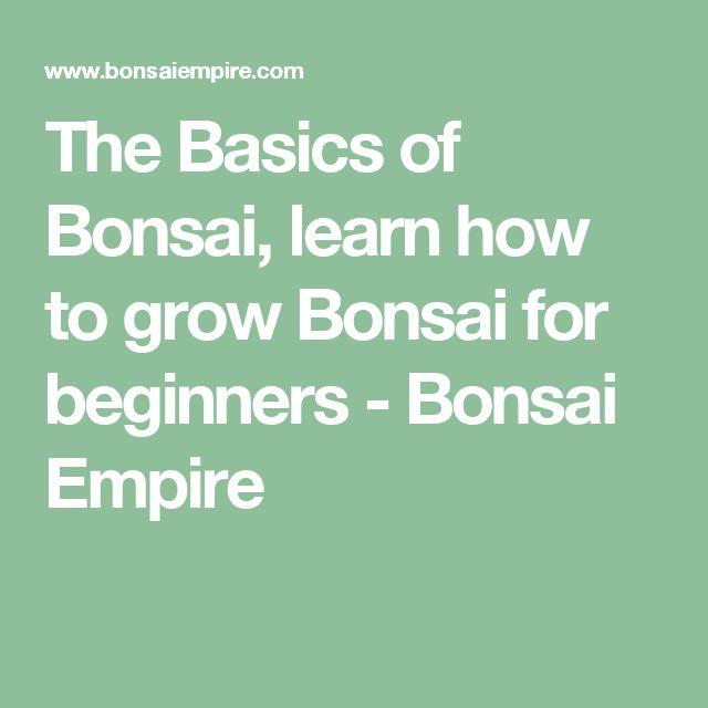 The Basics of Bonsai, learn how to grow Bonsai for beginners - Bonsai Empire