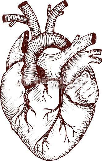 Arte vectorial : Anatómicos corazón de vector estilo vintage detallada ilustración