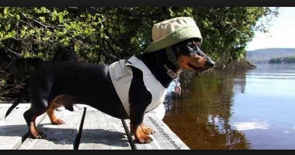 Roupinha para cachorro - Passo a passo - Arteblog