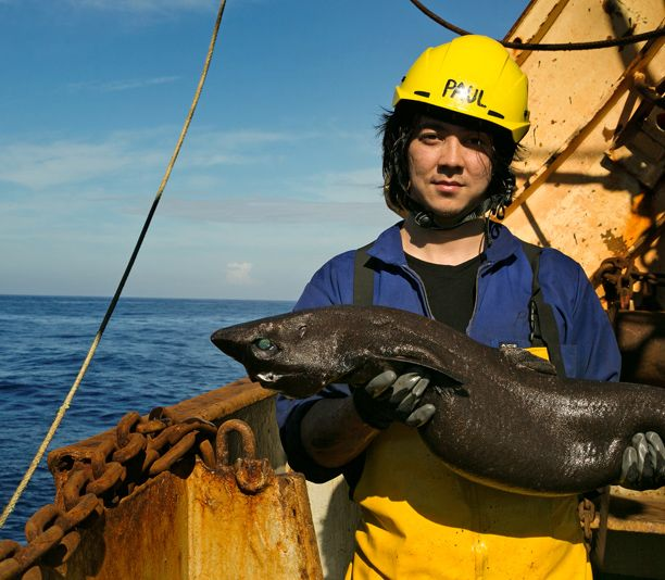 Shark researcher Paul Clerkin takes EW on a dive into 'Alien Sharks' | Inside TV | EW.com