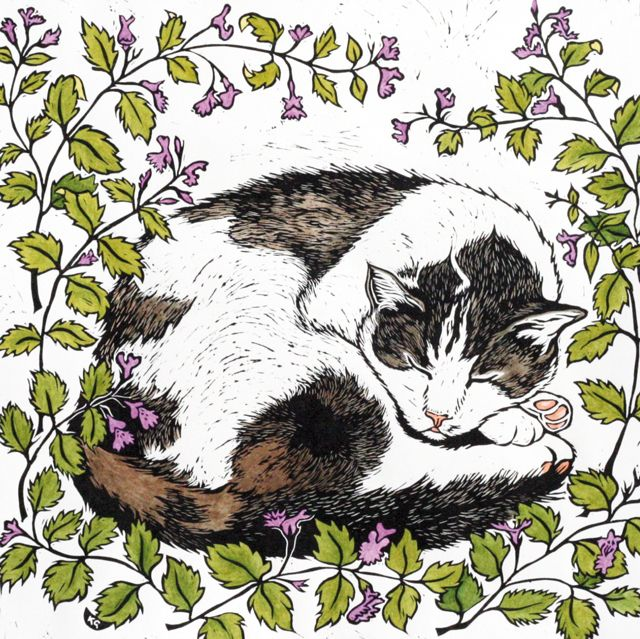 18 best greenpebble cards images on pinterest art cards greeting harry and the catmint green pebble m4hsunfo