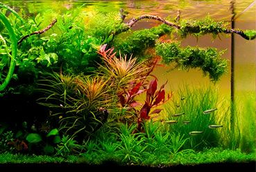 Best 20 Tropical Fish Store Ideas On Pinterest