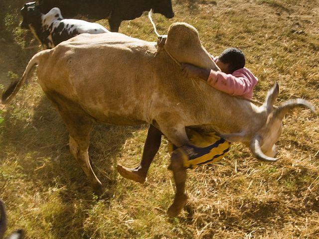 Rite de passage à l'âge adulte, le savika a ses codes, ses techniques, transmises de père en fils