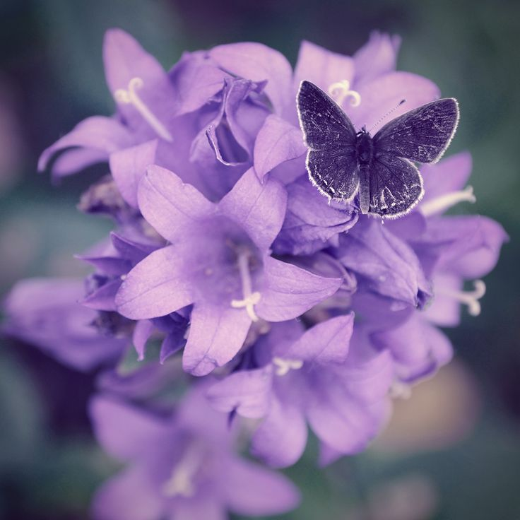 Purple Butterfly And Lillies Repinned By An Angels Touch LLC D B FlowersPretty