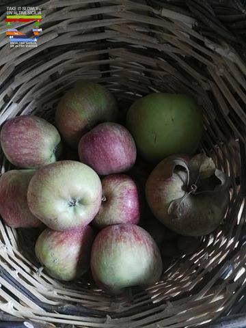 Marmellata di mele dell'Etna Sbucciate 1 kg di mele, eliminate il torsolo e grattugiatele. Pesatele e versatele in un tegame con 800 g di zucchero per ogni kg di polpa. Fatele cuocere per circa 2 ore e mezzo, mescolando continuamente con un cucchiaio di legno. Versate la marmellata, ancora calda, in barattoli di vetro e fatela raffreddare. Quindi chiudete ermeticamente e fate sterilizzare per 20 minuti.