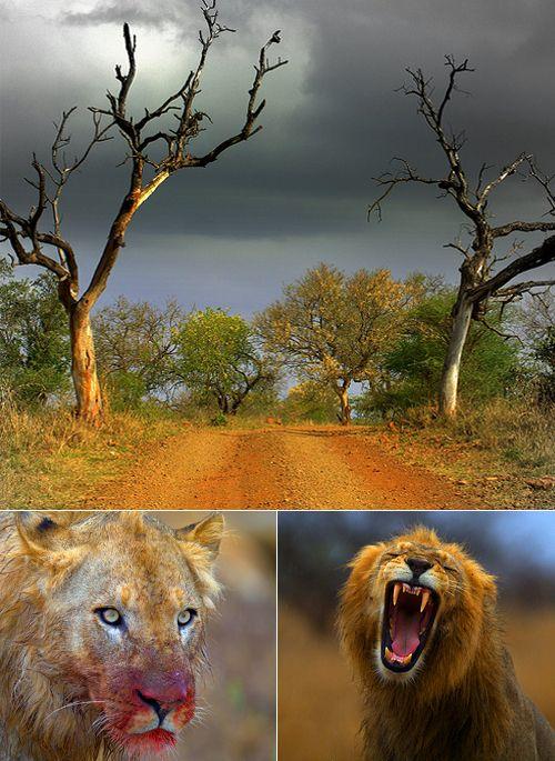 kruger-park   South Africa is Epic