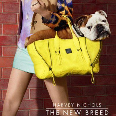 This must be photoshopped- there is no way that skinny little model is carrying that big squishy bulldog so easily!