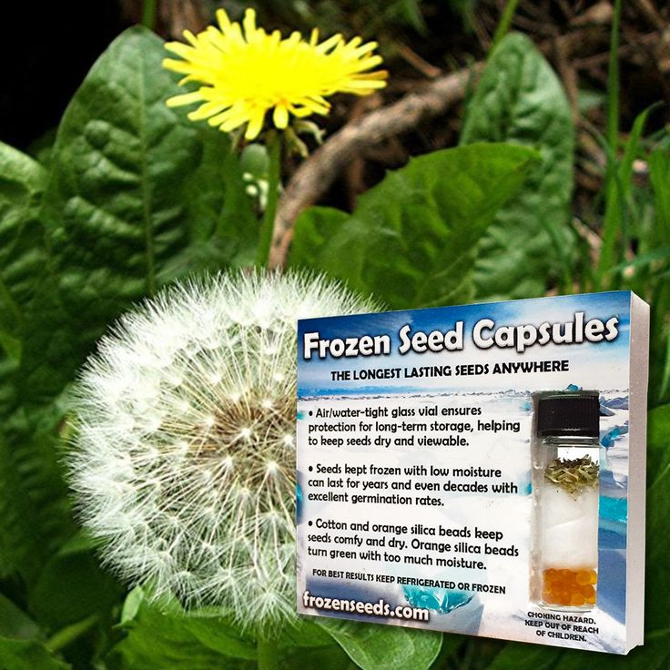 Dandelion Seeds (Taraxacum officinale) + FREE Bonus 6 Variety Seed Pack - a $30 Value!