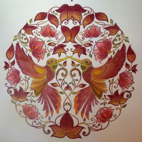 Johanna Basford Secret Garden Coloring Books Colouring Hummingbird
