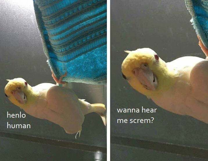 28 Ducking Great Birb Memes That Ll You Quack You Right Up With