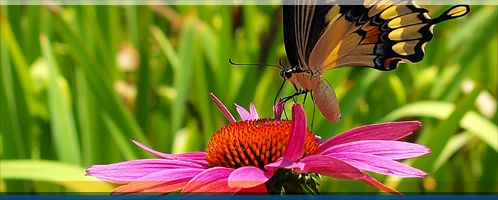 Humber Bay Butterfly Habitat - Featured Parks - Parks & Trails | City of Toronto