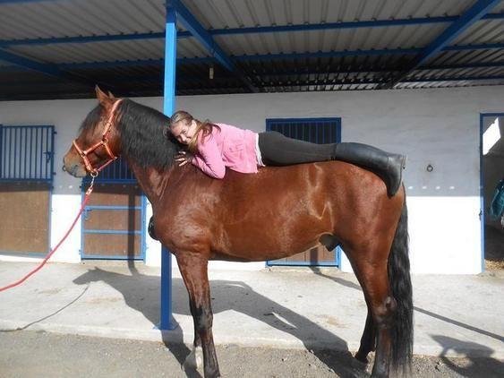 Venta de caballos, ponis, potros y yeguas. Busca y encuentra gran variedad de caballos en venta en Andalucía, el portal líder en España en compra y venta de caballos.