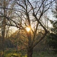 Lyssna till temat för perioden 16 april - 15 maj på kanalen måncykler & astrologi.