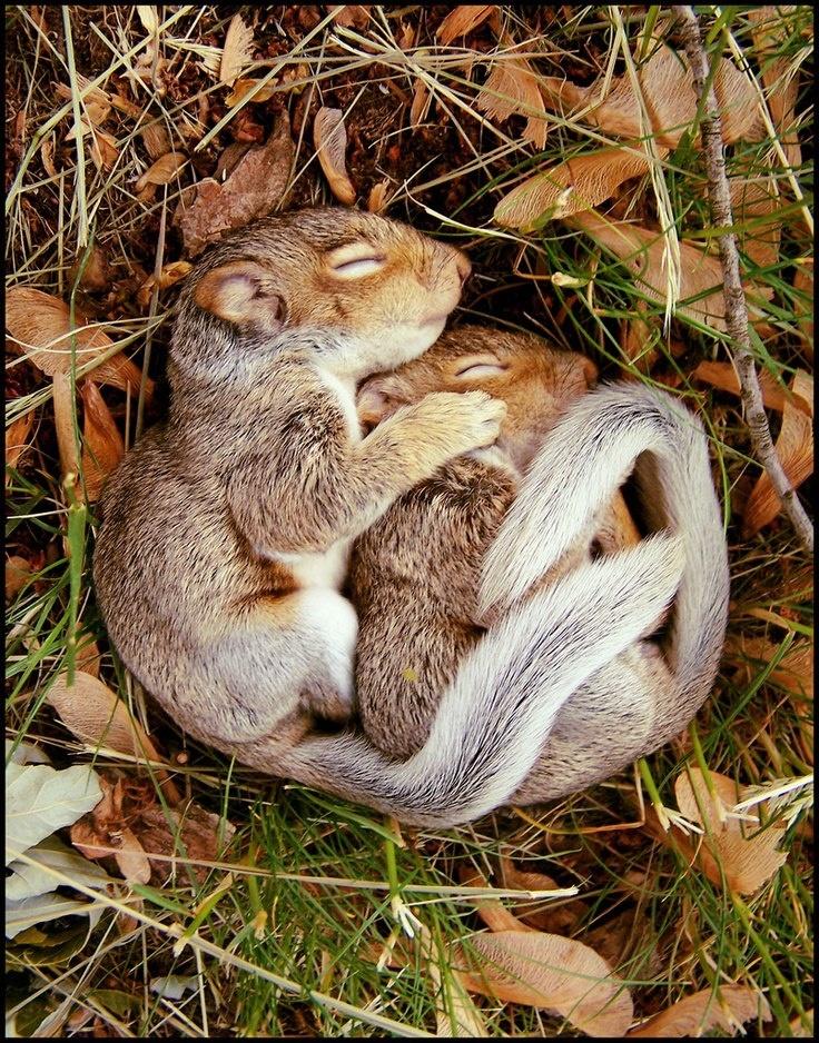 Squirrel Cuddle