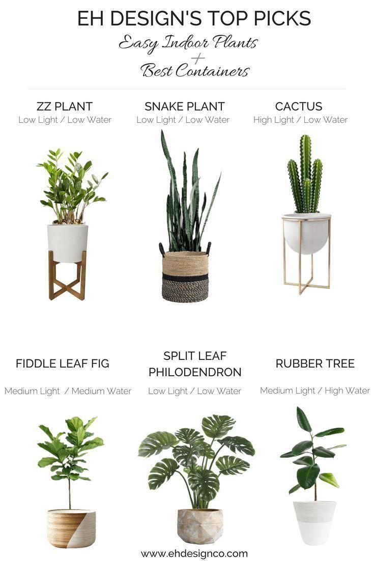 Easy Indoor Pflanzenführer
