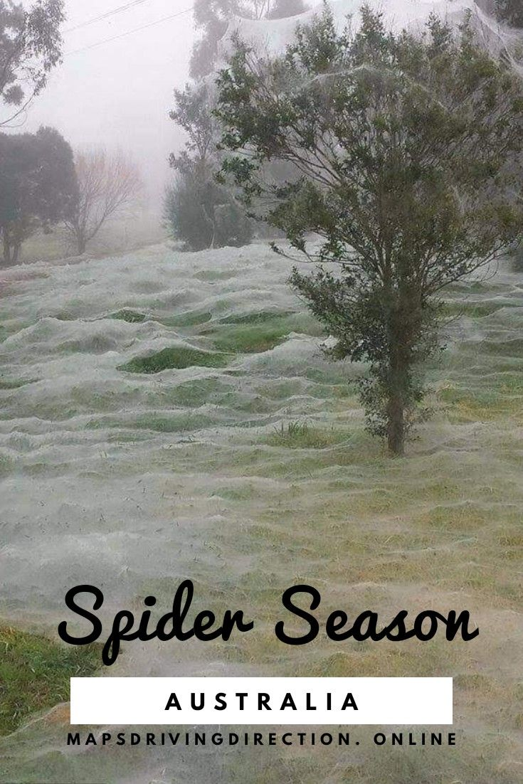Australia Map Quest.It S The Season Of Spiders In Australia Mapquest Driving