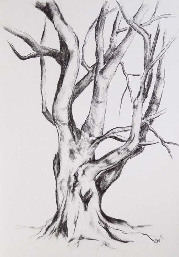 Original Graphite Drawing Tree Drawing Tree Por Bohemianinkstudios Tree Drawings Pencil Landscape Sketch Graphite Drawings
