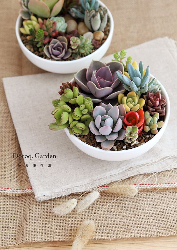 bowl of succulents, how lovely / #design #decor #gardening