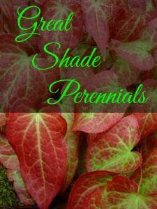 http://www.landscape-design-advice.com/shade-perennials.html Some of my favorite, low maintenance, beautiful shade perennials! #perennials