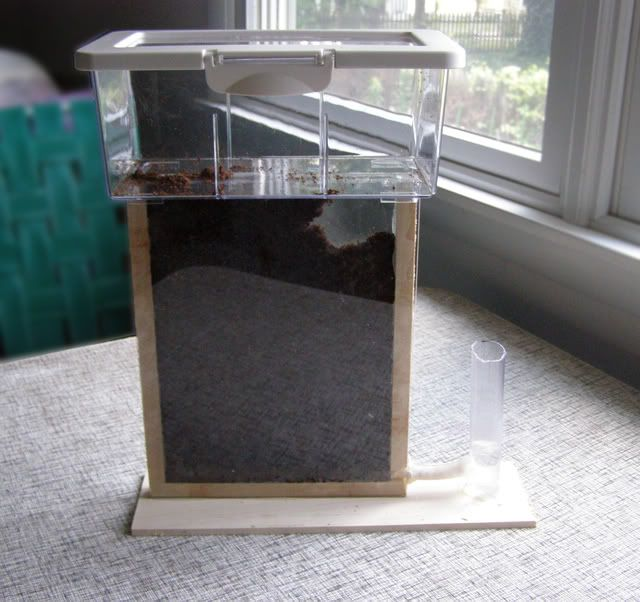 how to build your own ant farm