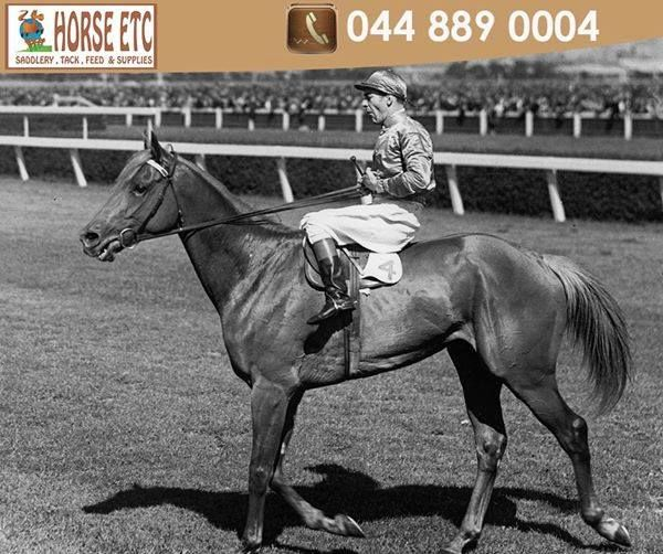 The Melbourne Cup is Australia's major thoroughbred horse race event. Since 1882 New Zealand bred horses have won the event 40 times whilst the British bred horses have won only five. #tbt #horses #racehorse