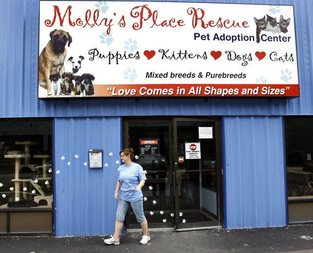 Owner of Hampden Township pet adoption center accused of illegally adopting dogs | PennLive.com