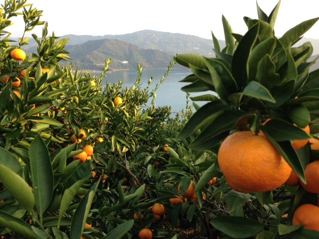 Ehime - The Peaceful Prefecture of Japan