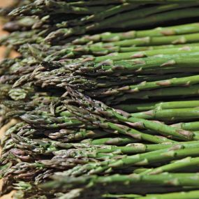 Jersey Knight Giant Asparagus  Huge crops! This productive variety will give you impressive yields each and every year. Its extra large, uniform, tender spears are good for fresh eating, cooking or making salads. Cold-hardy and heat-tolerant. Harvest from early April through mid May. Self-pollinating. Pkg. of 10.