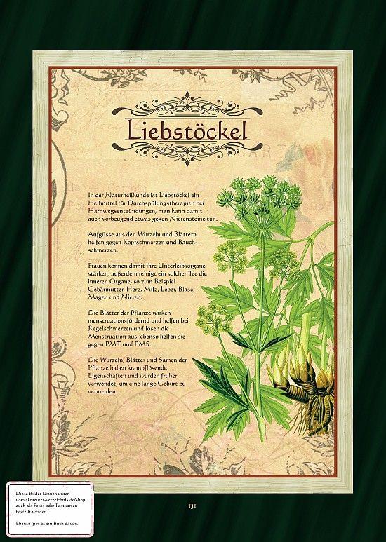 Liebstöckel (Maggikraut)