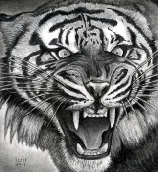 How to Draw a Roaring Tiger Step