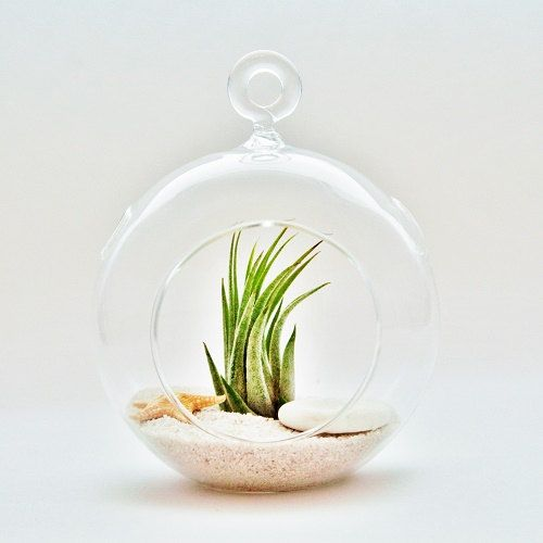 12 Hanging Air Plant Terrariums Beachy by AirPlantDesignCenter