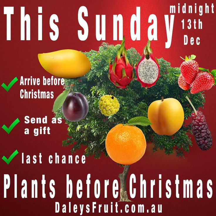"Last chance to have plants delivered before Christmas. We can also deliver as gifts and handwrite on a card on your behalf. Just add to cart enter their postcode and select ""send as a gift"" at the checkout. #daleysfruit"