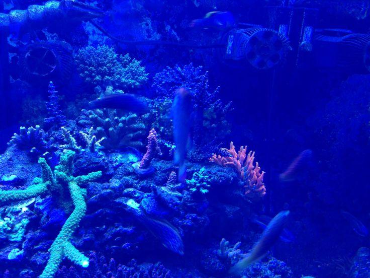 Marine Aquarium using SICCE Voyager pumps model 2 and 3