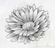 Image result for calendula flower tattoo