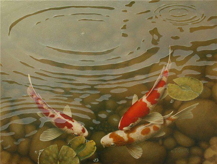 Les 23 Meilleures Images Du Tableau Coy Fish Sur Pinterest