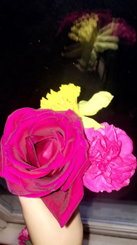 best flowers images on pinterest beautiful flowers