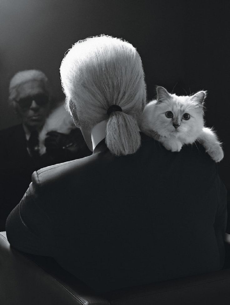 Karl Lagerfeld and Choupette - pretty hard to tell which is the greater celebrity these days...