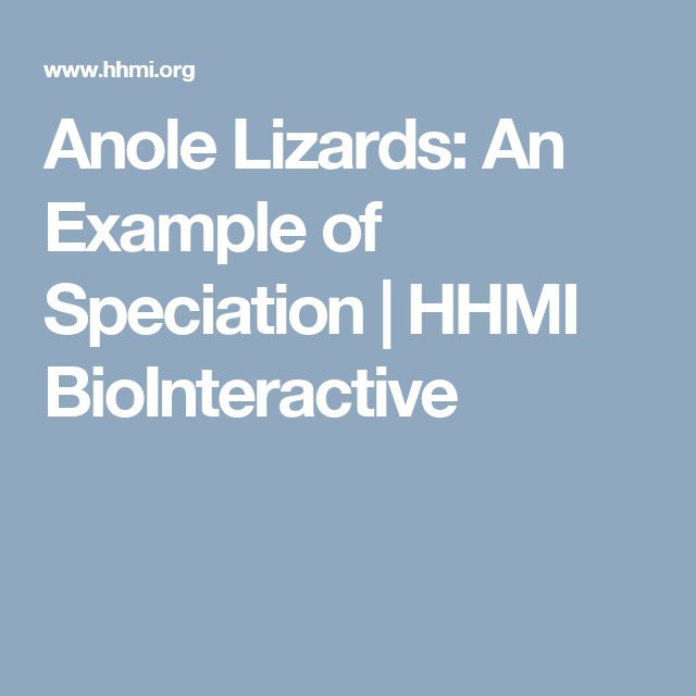 Anole Lizards: An Example of Speciation | HHMI BioInteractive