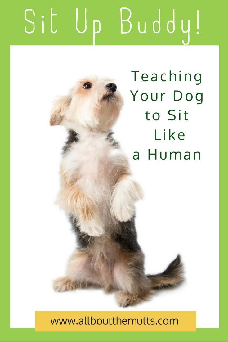This Is A Fun Trick To Teach Your Dog This Trick Is A Foundation