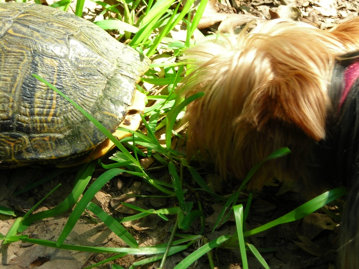Nose to nose with the TURTLE!!!
