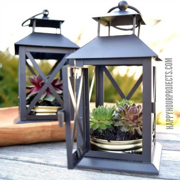 Succulents Planted in Mini Metal Lanterns