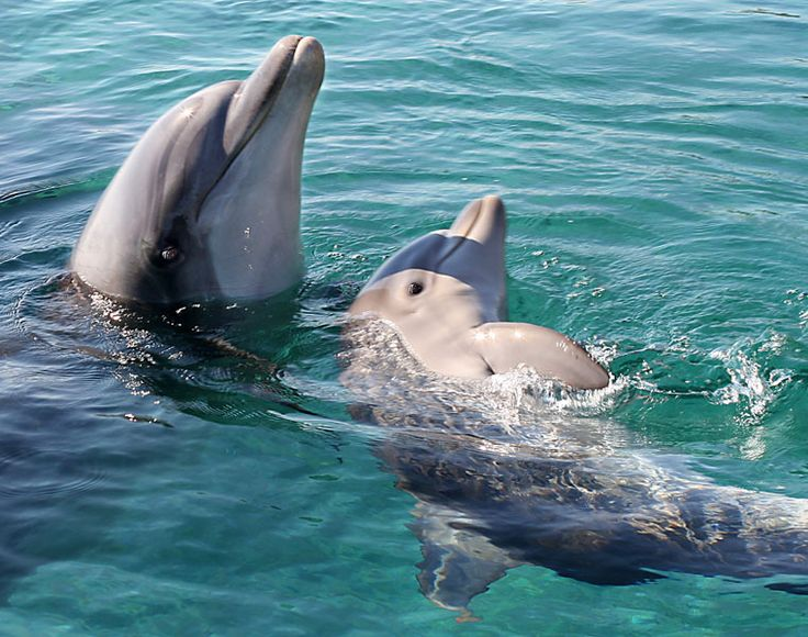 Google Image Result for http://findingtheworld.com/wp-content/uploads/2012/04/dolphin-baby.jpg