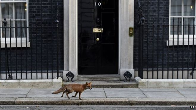 Fox on Downing Street -- A Point of View: A baffled American's take on the UK election