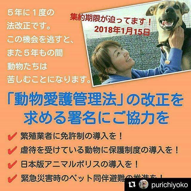 #動物愛護法の改正を求めるバトン どんなことなのかよくわからず、彷徨いつづけ、とてもわかりやすかった @purichiyoko さんより リポストさせていただきます✨ インスタはキャプションにURLを書いても飛べないからの不便ですね💦 中身をよく確認して、同意されましたら署名の上、リポストいただけると嬉しいです。  法改正なんかなくても、動物に優しい国になるといいな😌 それにはまず、ペットちゃんであれば、共に暮らすための躾はとても大切だと思っています🌟 * *************** . 日本の動物たちの未来を左右する重要な署名です。 「犬や猫の殺処分をなくしたい」 「悪質なペット業界をなんとかしてほしい」 「動物虐待した者を厳しく罰してほしい」 「災害時にペットと一緒に避難したい」… こういった動物のことを思う人たちの願いは、動物愛護管理法の改正なしには実現できません。 . 「犬や猫を飼っているけど、まだ署名していない…」そんな方は、ご自身の飼い犬や飼い猫の為にもぜひ署名してください🙏…